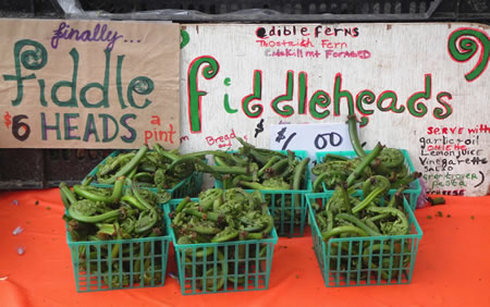 Fiddleheads at Union Square Green market
